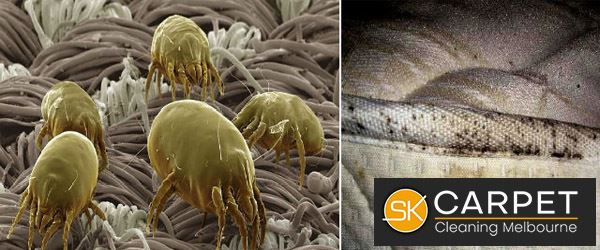 Dust Mites Removal and Prevention Silverleaves