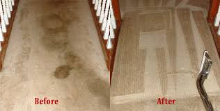 Pet Odour Removal From Carpet